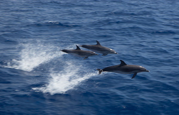 Dolphins05